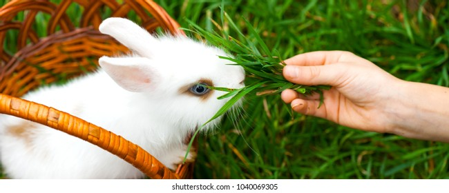 Little child is feeding  of the white decorative rabbit the green grass.Rabbit is sitting in the basket. Happy Easter concept