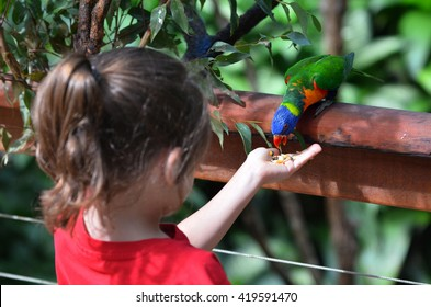 Little child (girl age 5-6) feed a Rainbow Lorikeet (Trichoglossus moluccanus) native bird to Australia sit on a tree branch in rainforest in the tropical north of Queensland, Australia.
