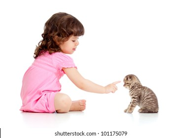 little child playing and bringing up Scottish kitten
