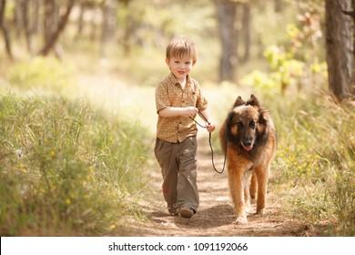 little child running around with a big dog Tervuren breed