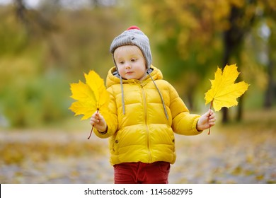 Little child walking in the city park at autumn day. Toddler boy enjoy of fall weather. Cute kid with yellow maple leaves