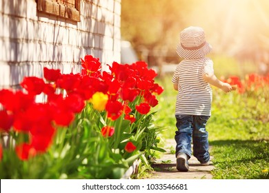 Little child walking near tulips on the flower bed in beautiful spring day. happy baby boy outdoors in the garden with watering can