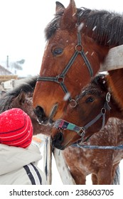 little children feeding horses outdoors