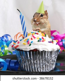 little chipmunk celebrates his birthday