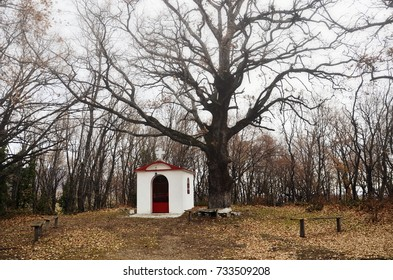 Little church in the woods during winter season at Pieria, Greece