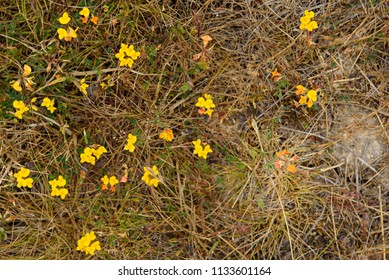 Little Coastal Yellow and Orange Wildflowers