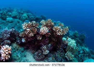Little coral reef in micronesia.