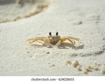 Little crab living on the beach on Klein Bonaire islet