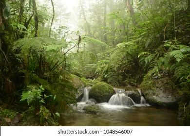 Little creek flowing in the cloud forest of Santa Elena, Costa Rica. Eerie, mystical atmosphere.
