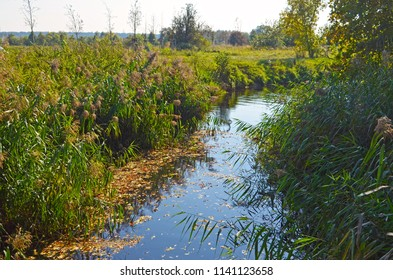 Little creek at a sunny autumn day in the surrounding countryside of Berlin, Germany