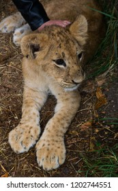 the little cub stroking a woman's hand