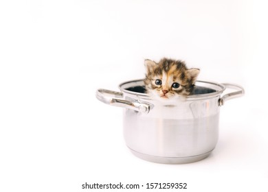 A little curious striped kitten looks out of the pan with sad eyes close-up.