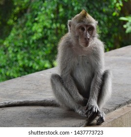 Little cut monkey sits on stone