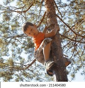 little cute boy climbing on tree hight