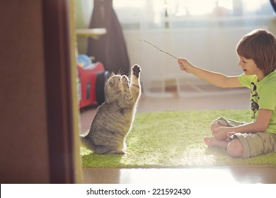 A little cute boy playing with cat
