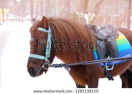 little cute brown pony