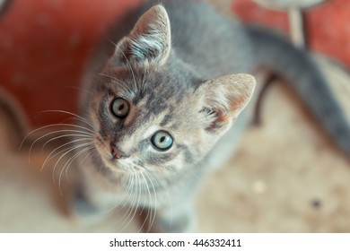 Little cute cat looking to the right