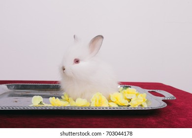 little cute decorative rabbits. fluffy animals. posing in Studio on a white textured background. Wallpaper for desktop