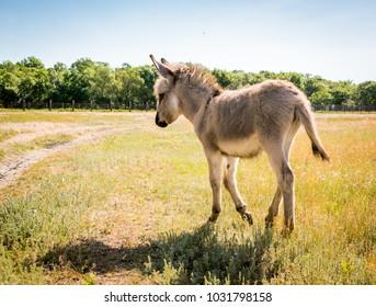 little cute donkey