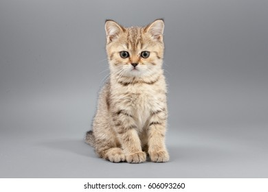 Little cute funny kittens on a gray background.