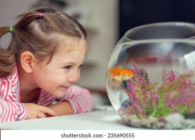 little cute girl looking at goldfish in tank