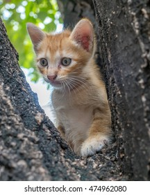 Little cute golden brown kitten climb up on outdoor large tree, selective focus on its eye