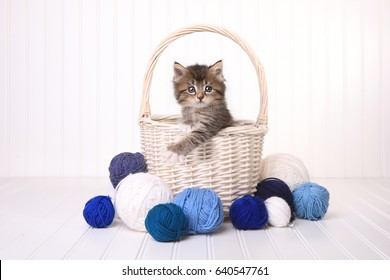 Little Cute Kitten in a Basket With Yarn on White