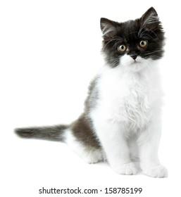 Little cute kitten, isolated on white