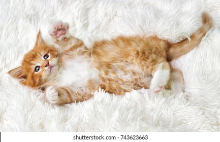 little cute kitten maine coon looks up