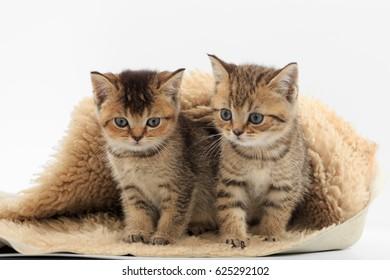 Little cute kitten on a fur litter on a white background.