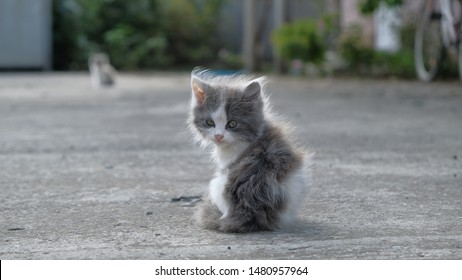 Little, cute kitten outdoor in village