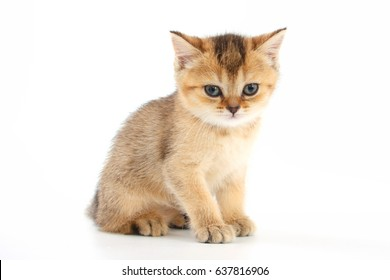Little cute kitten striped on a white background.