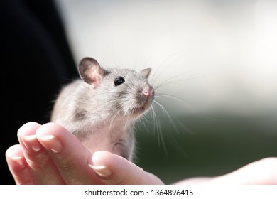 Little cute mouse with a mustache on woman's hand close up