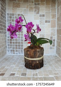 little cute orchid Stones background