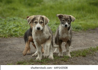 Little cute puppies with sad faces sit on a ground and one lifts paw