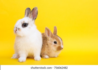 Little cute rabbits on the yellow background