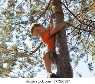 little cute real boy climbing on tree hight, outdoor lifestyle concept