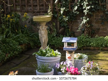 Little cute robin bird eats birdseed in a bird feeder in a garden among flower pots and flowers. Red Breast robin is the National Bird of Great Britain. Concept: English garden.