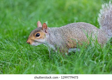 A little and cute squirrel
