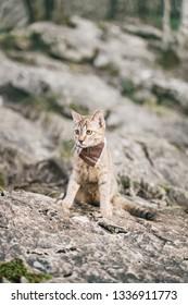 Little cute traveler cat wearing in bandana walking on rocky terrain outdoor.