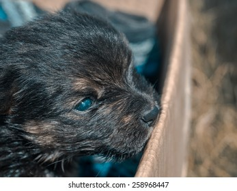 a little dark puppy terrier in a cardboard box