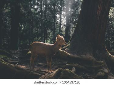 Little deer in the wild