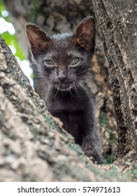 Little dirty black kitten sit on outdoor tree, selective focus at its eye