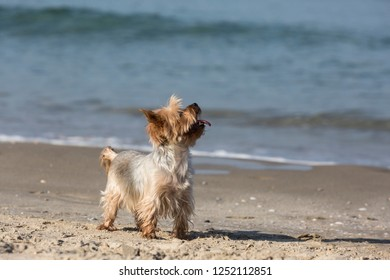 Little dog beautiful color plays on the beach