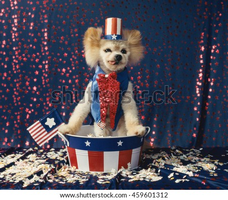 239d433c2ad Little Dog Dressed Like Uncle Sam Stock Photo (Edit Now) 459601312 ...
