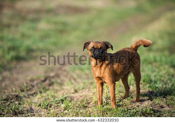Little dog enjoys the sun