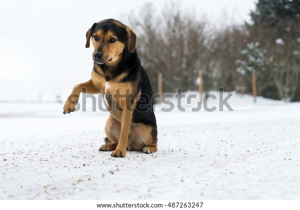 Little Dog with hurted Paw
