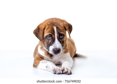 Little dog isolated on a white background.