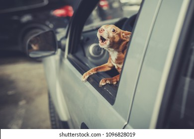 Little Dog Looking out the car window at parking area and barking, vintage filter effect