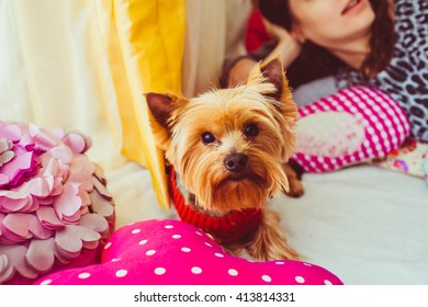 Little dog is lying next to the pink pillow